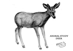 Deer by SupesSoups