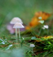 small mushrooms by KariLiimatainen