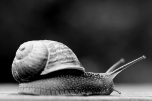 Snail lost in an limited focal field III by pagan-live-style
