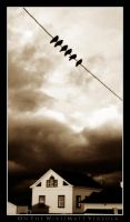 On The Wire by CapnVeeZee