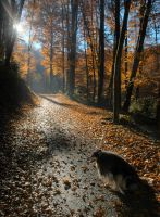 Dog and sun by Photomic