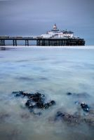 Mussels by wreck-photography