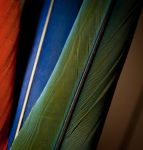 Macaw feathers 2 by copperarabian