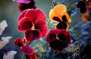 Colorful Flowers by Tailgun2009