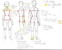 Female Anatomy Notes by Artemis-Solie
