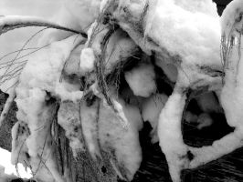 Snow-Covered Pampas Grass by EliseIsVain