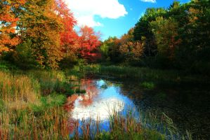 Stock: Autumn Stream by Celem