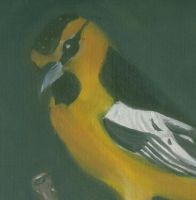 Yellow Oriole by KendrawD