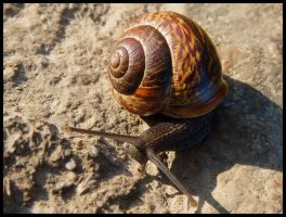 Beautiful snail by Pildik