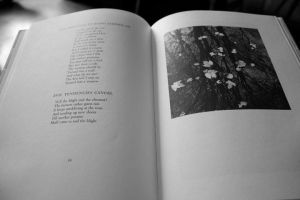 A Robert Frost Book of Poetry by Jordanart4peace