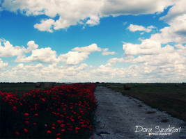 poppies and clouds on a place by szdora91