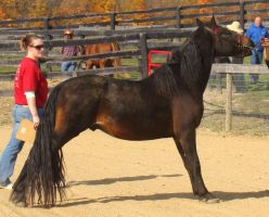 Halter Horse 4 by shi-stock