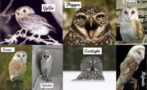 The Real Owls of Gahoole by Hijinata