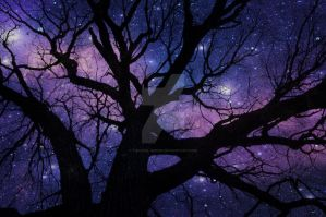 Stars through the Branches by Tinuviel-Beren