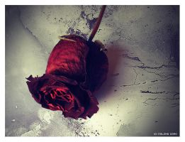Rosa Marchita - Withered Rose by LoMiTa