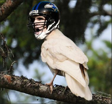 NFL - Flacco Albino Raven by yurintroubl