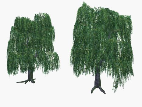 Willow trees by ED-resources