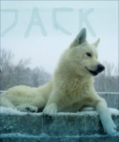 Jack hearts snow by tailfrost