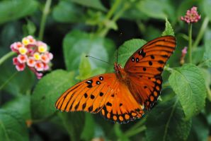 Orange butterfly 1 by LucieG-Stock