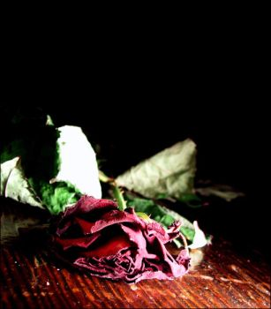 Dying Rose.. by Allfire