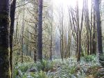 Oregon Forest 1 by squidlarkin