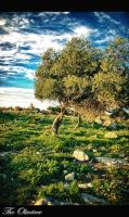 The Olivetree by calimer00