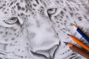 Snow Leopard WIP by Michaela9