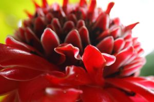 Tropical Flower 6 by w-shayler