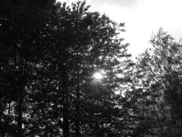Sun Behind The Trees II by Ynnck