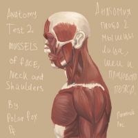 Anatomy  side view by Peasmman