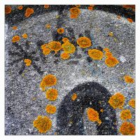 lichen on graffiti... by iangrahamimages