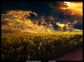 Corn Landscape by alvaro93