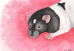Postcard Sized Rat Painting by wolfysilver
