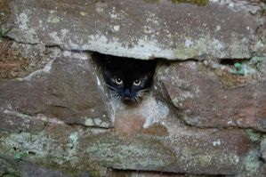 Cat in Wall by Mararda