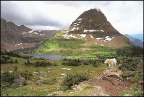 Mountain Goat by paumyself