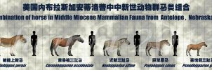 combination of Horse-1 by sinammonite