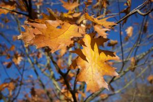 Leaves of Autumn. by rogerdurling