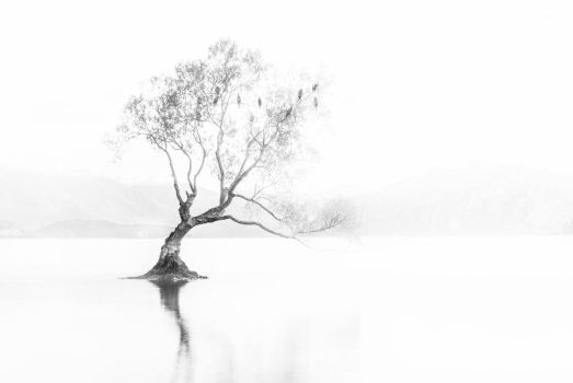 Tree by lomatic