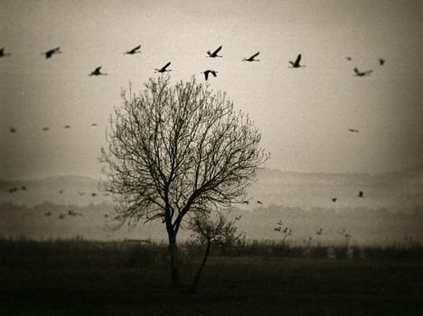 .... Birds to the south depart by YuriBonder