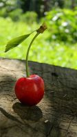 Cherry by Reload1222