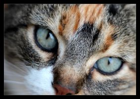 Regard ! by Thelive33