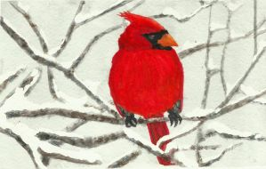 Red Cardinal by ewebster123