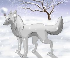 Wolf  snow by micpoppet
