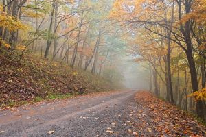 Misty Autumn Forest Road by somadjinn