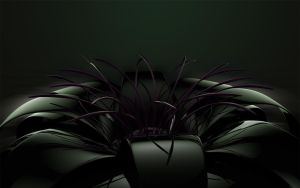 black flower with soft light by xylomon