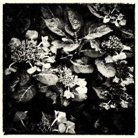 My Personal Autumn 03 by HorstSchmier