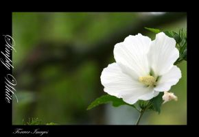 Simply white by xXForeverImagesXx
