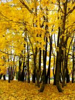 Fall Background 3 by FairieGoodMother
