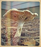 the small mushroom by x--photographygirl