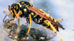 Nightime Wasp by Mackingster